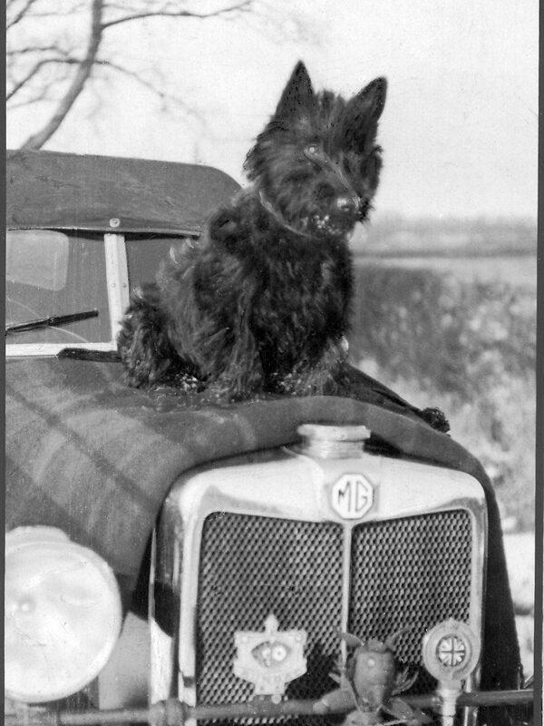 scottie-dog-m-type